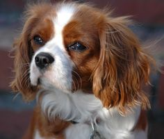 Small dogs, big assumptions. Here are 5 that aren't necessarily true.