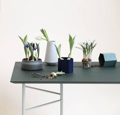 60 vind-ik-leuks, 3 reacties - Interior Studio & Designshop (@crioll.design) op Instagram: 'Greenery in pots from @fermliving available at Crioll Designshop. (Table also ;)'