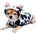 chihuahua halloween costumes | Cow Dog Costume for Small Dogs