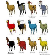 llama | Tumblr found on Polyvore