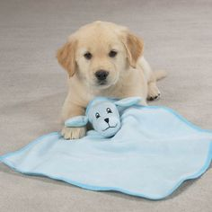 We offer a wide range of designer apparel for dogs as well as accessories for all sizes. We make your furry family members look more adorable! Cute Baby Puppies, Cute Dogs, Baby Pets, Baby Kittens, Snuggle Bear, Baby Animals, Cute Animals, Bear Puppy, Beautiful Dogs