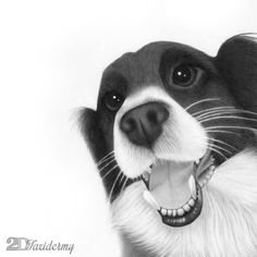 Tawba - she's a shy puppy but her mom wanted to show a different side of her :: hand drawn portrait issuing graphite pencils on Bristol board