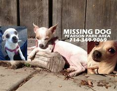 STILL MISSING - Lost chihuahua in Anaheim (Near Pearson park)  Zeyn at Sycamore  Expanding search from OC - Lost female chihuahua near Pearson Park in Anaheim. UPDATE: 3 people say they saw her in Pearson Park on Fathers Day. If you were there or know somebody who was, please contact us right away. Moxie needs medication g4bkk-4533439566@comm.craigslist.org