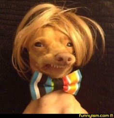 I love dogs in wigs