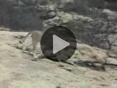 Christian The Lion. Watch this touching video and see the bond between man and beast...!!!