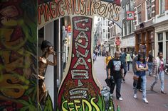 There are many magic mushroom and canabis stores along Nieuwendijk, Amsterdam.