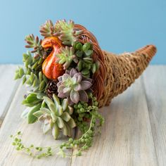Try a twist on the traditional cornucopia this year with a succulent cornucopia! This simple centerpiece is sure to impress your guests!