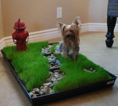 The Pet Patch  Cool idea, except I wouldn't put the hydrant so close to the edge...knowing my dogs. ;-)