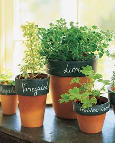 Organize plants and seedlings, and identify homegrown kitchen herbs, by painting the collars of clay pots with stripes of chalkboard paint.