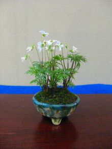 盆栽:東海雅展より その12  春嘉の盆栽工房