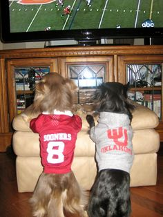 boomer sooners images - Bing Images