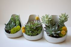 SucculentLOVE... little tear drop ceramics from Jen E Ceramics filled with succulents and billy buttons!