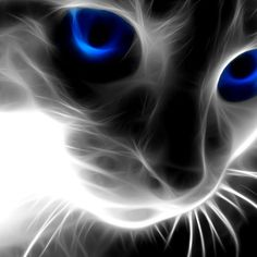 Abstract Animals Cat Latest Wallpaper