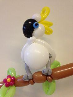Cockatoo balloon by Clown Tallie