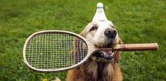 Dalla strada alla terra rossa: l'Open tennis di San Paolo mette in campo i cani raccattapalle :http://www.qualazampa.news/2018/03/04/dalla-strada-alla-terra-rossa-lopen-tennis-di-san-paolo-mette-in-campo-i-cani-raccattapalle/