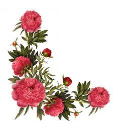 tube fleurs - Google'da Ara