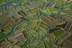 Marais de l'embouchure de la Seudre