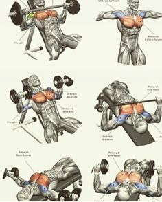 Upper-back weight exercises Back Weight Exercises, Weight Training Workouts, Gym Workout Tips, Best Cardio Workout, Cycling Workout, Workout Men, Workout Videos, Shoulder Workout Routine, Best Chest Workout