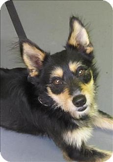 #URGENT!! #Dallas, #GA - #Terrier (Unknown Type, Medium) Mix. Meet 14-03-0592 a #Dog for Adoption. Act quickly to adopt 14-03-0592. Pets at this Shelter may be held for only a short time.