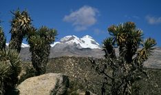 Pico Cristóbal Colón - highest mountain in Colombia, with an estimated height of 5,700 metres (18,700 ft)