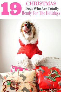 Funny christmas dog pictures - our special gif for you. Dog Christmas Pictures, Christmas Animals, Funny Christmas, Cute Dog Pictures, Dog Photos, Cute Dogs And Puppies, Cute Friends, Little Babies, Dog Toys