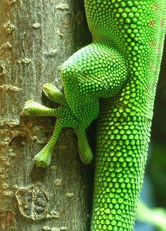Beautiful, Textured Nature