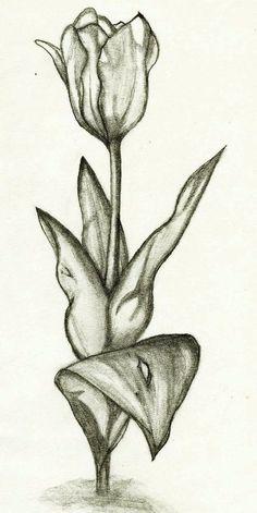 Contoh Sketsa Gambar Bunga Sketsa Bunga Mawar Dengan