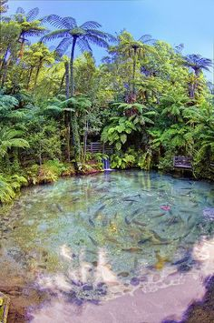 """Primordial New Zealand by Altus Wilder on Flickr. """"5xp handheld HDR rendered shot taken of a trout pond at a park we visited in Rotorua.Vegetation looks like something you'd see in Jurrasic Park."""""""