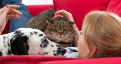 As a responsible pet parent, you should be aware of certain diseases your dog or cat can transmit to you and your loved ones.