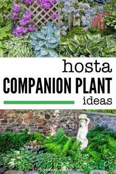 Lots of pictures of Hosta companion plants! I love all the options for perennials that will look good with Hostas in my shade garden. #fromhousetohome #shade #garden #plants #hostas #shadeperennials