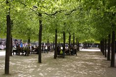 Parisians enjoy the early spring under rows of linden trees.