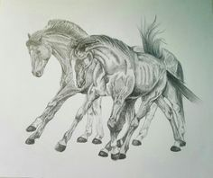 Free horses, Cardhu and co