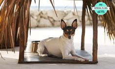A Spring Fling for your pet! (Photo courtesy of Viceroy Riviera Maya) #TCSpringFling