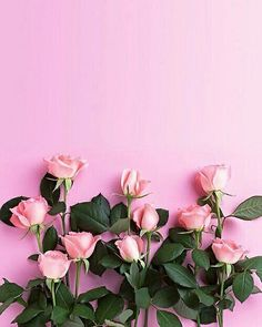 Pink wallpaper, pink wallpaper iphone и flower wallpaper. Tumblr Wallpaper, Pink Wallpaper Iphone, Nature Wallpaper, Rose Wallpaper, Painting Wallpaper, Mobile Wallpaper, Wall Wallpaper, Beautiful Wallpaper For Phone, Spring Wallpaper