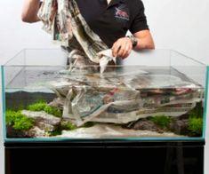 A thoroughly modern aquascape - Practical Fishkeeping Home Aquarium, Aquarium Fish, Fish Aquarium Decorations, Aquarium Landscape, Rock Decor, Aquatic Plants, Planted Aquarium, Landscaping Tips, Landscape Design