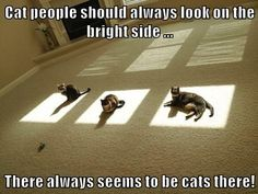 Just Don't Try to Take the Sun Spot - a cat for every bright thought - kitty cat humor funny joke gato chat memes