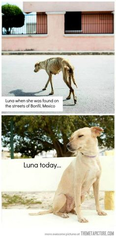 The story of Luna…Another one saved, Thanks to the Human for saving her.. :)