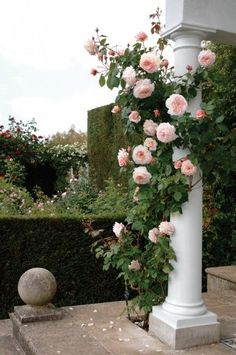 A Shropshire Lad - Climbing - David Austin English. I like that a hole was left at the column base for the rose to grow in instead of putting a container there.