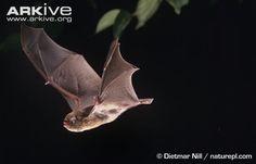 animation studies of bats - Google Search
