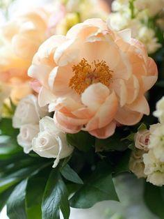 Peach Peonies: #flowers #peach: http://nicolehill.blogspot.com/2011/06/peach-peonies.html