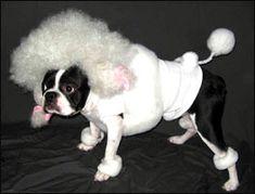 @Kelli Chandler Lemons Skeeter's Halloween costume in pink??? You can call him Bentli :)))