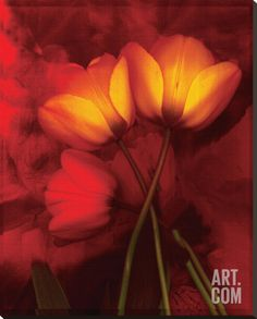 Tulip Fiesta in Red and Yellow I Stretched Canvas Print by Richard Sutton at Art.com
