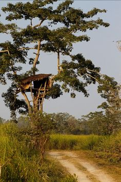 Photograph tree house by Soubhagya Sagar Behera on 500px (a lookout point on the baghori trail in kaziranga national park)