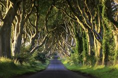 The Dark Hedges - Irlanda do Norte Dark Hedges, Game Of Thrones Locations, Tree Tunnel, Excursion, Destination Voyage, Filming Locations, Guinness, Northern Ireland, Day Trips