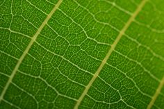 Green leaf closeup is free stock photo ready to download in full size, full glory. Don't worry! Free of charge. Photo is made by Zdeno Cemanand dimensions of this photo are 4608x 3072px. This pho…