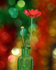 Photography~Green vase and red flower Red Green Yellow, Green Colors, Red Color, Photo Bokeh, Feather Bouquet, Bokeh Photography, Red Cottage, Out Of Focus, Green Vase