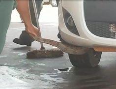 Cobra é resgatada de suspensão de carro em posto de combustíveis