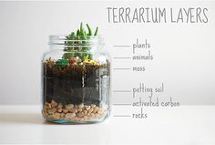DIY Kid-Friendly Terrarium Handmade Charlotte is teaming up with Pottery Barn Kids to create a series of original DIY projects for the kiddos! Mini Terrarium, How To Make Terrariums, Terrarium Plants, Succulent Terrarium Diy, Mason Jar Terrarium, Terrarium Centerpiece, Terrarium Wedding, Diy For Kids, Crafts For Kids