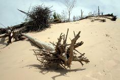 Landscape, trees, sand, www.luisierra.com