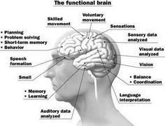 Functions of the brain and a comprehensive overview of Epilepsy Brain Anatomy, Short Term Memory, Trigeminal Neuralgia, Behavioral Science, Epilepsy Awareness, Brain Activities, Brain Health, Mental Health, Brain Injury